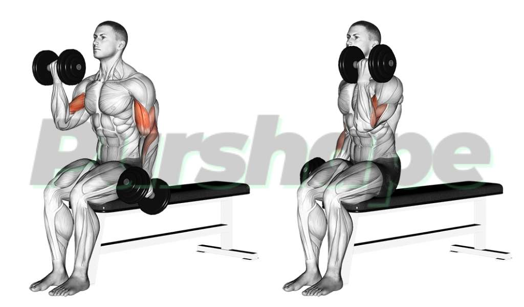 Exercice curl biceps assis