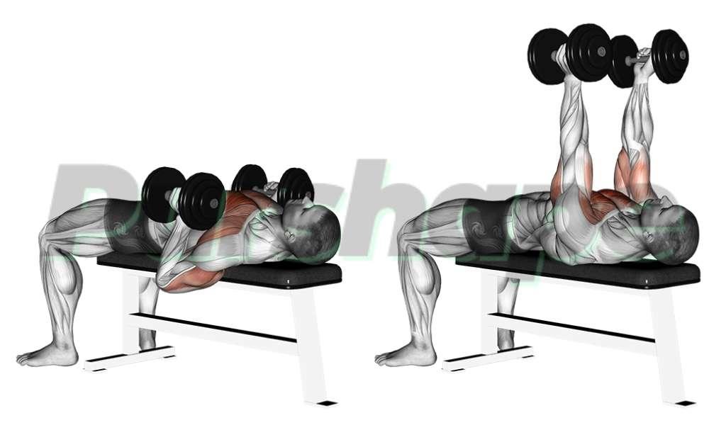 Exercice développé couché haltères