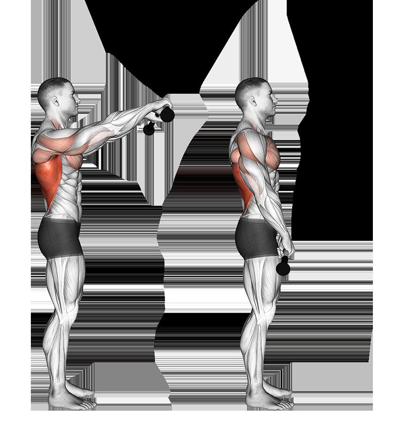 Image traction à bras tendus Purshape